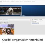 bergamasker-hirtenhund
